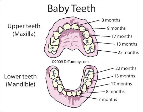 Bé mọc răng khi nào? Thứ tự mọc răng ở trẻ