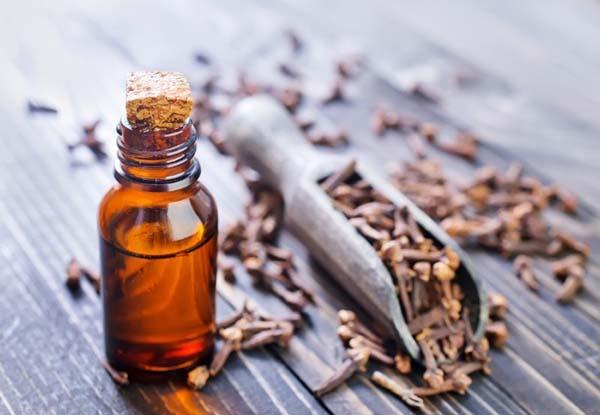 Chữa sưng lợi răng hàm bằng dầu đinh hương